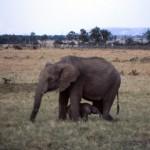 Kenya 1986