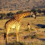 Kenya 1985