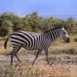 Kenya 1984